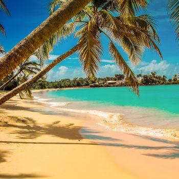 Martinique.jpg2-min